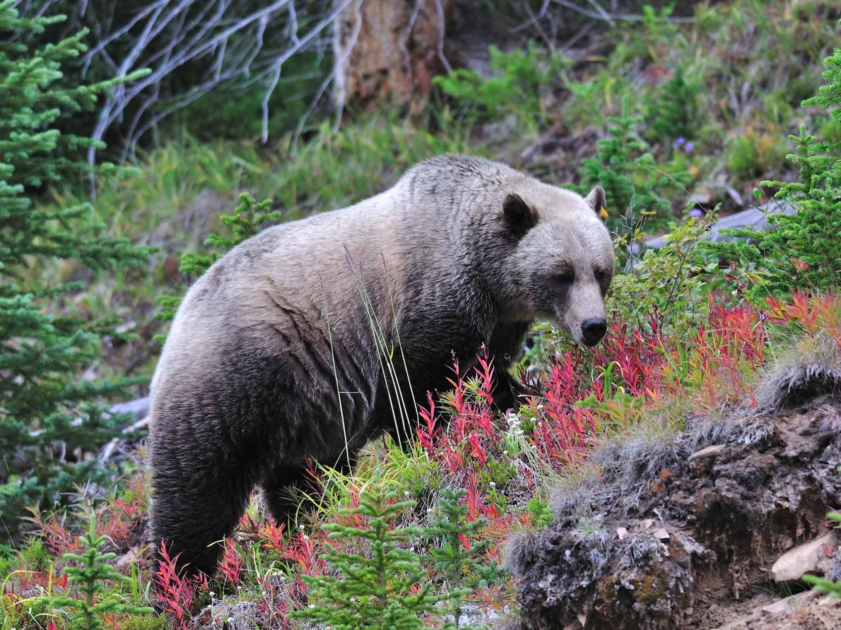 Protecting Wildlife in the Rocky Mountains Main Photo