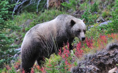 Protecting Wildlife in the Rocky Mountains