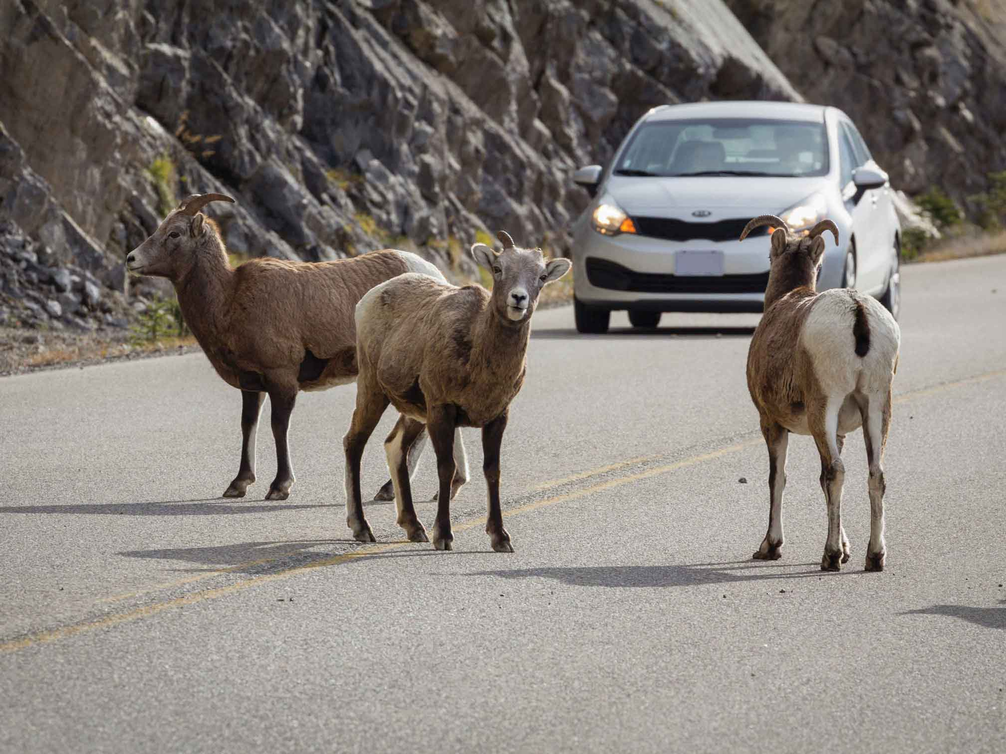 Parks Canada-Rogier Gruys, Blue Peak Travel Photography