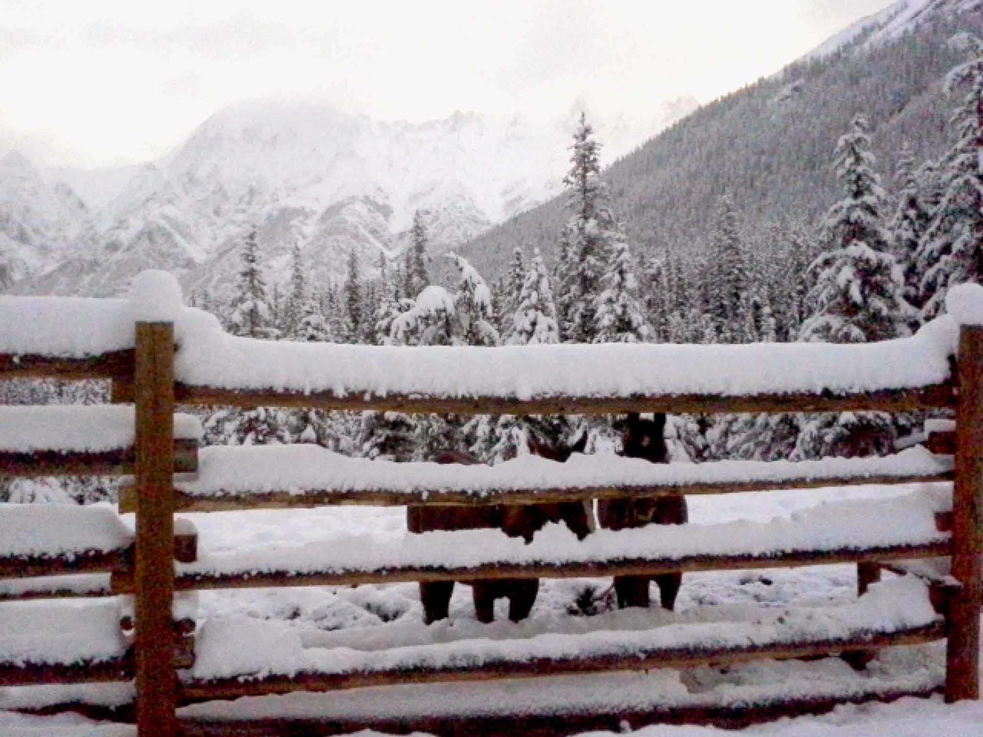 Deep snow on a wood post fence in front of two horses and mountain scenery in the backcountry of Banff National Park. When preparing your camping checklist, make sure you're ready for the unexpected!