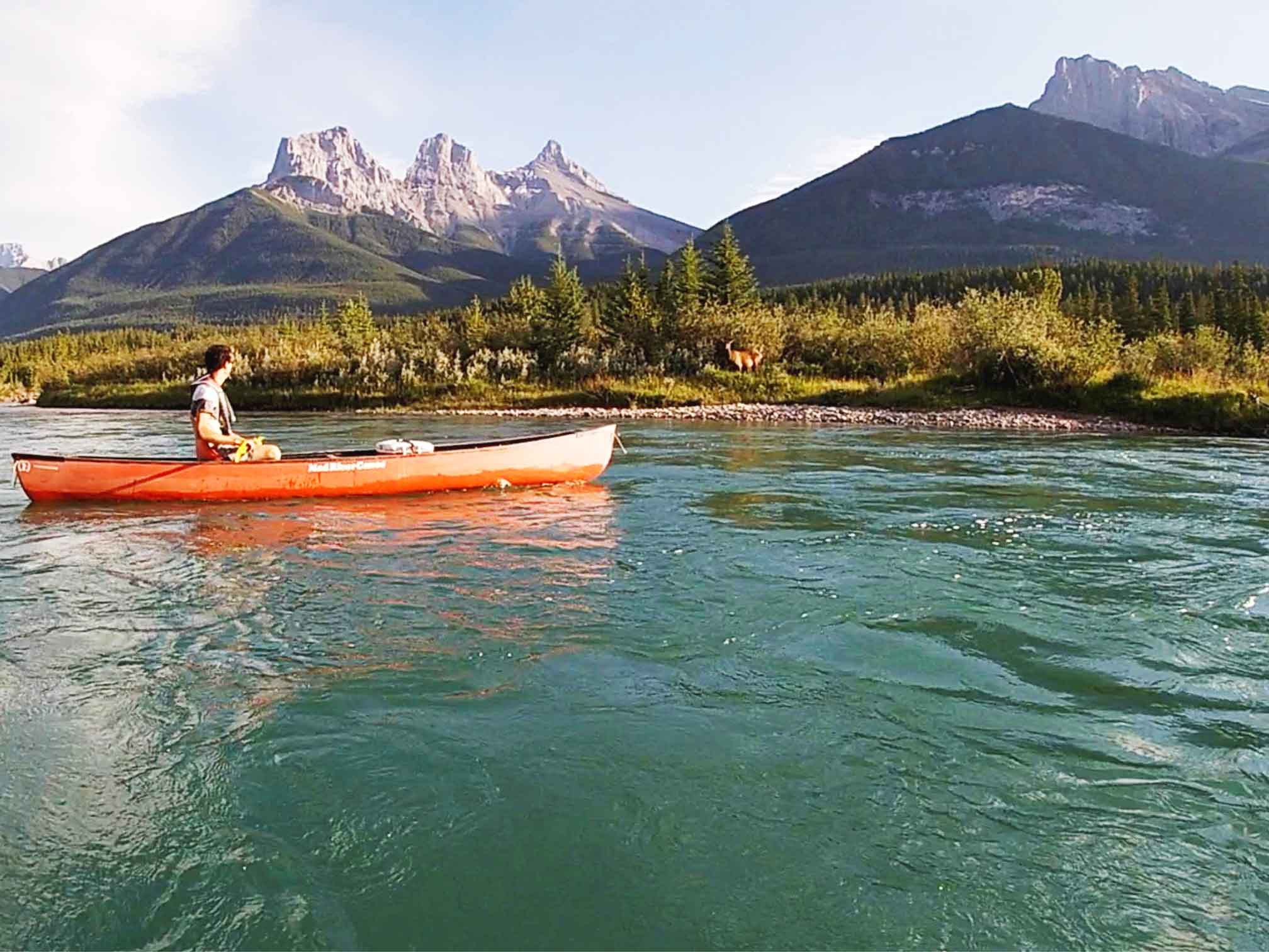 An elk on the side of the Bow River while canoeing in Canmore on an evening paddle between Canmore and Exshaw
