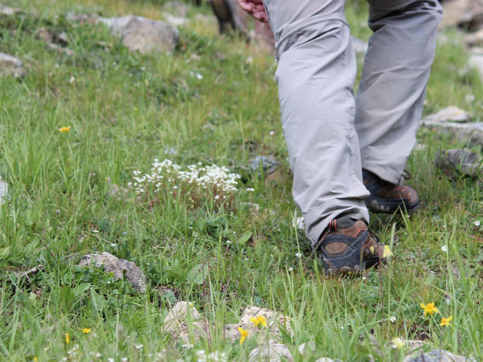 White Mountain Adventures Heli-Hike walking on grass