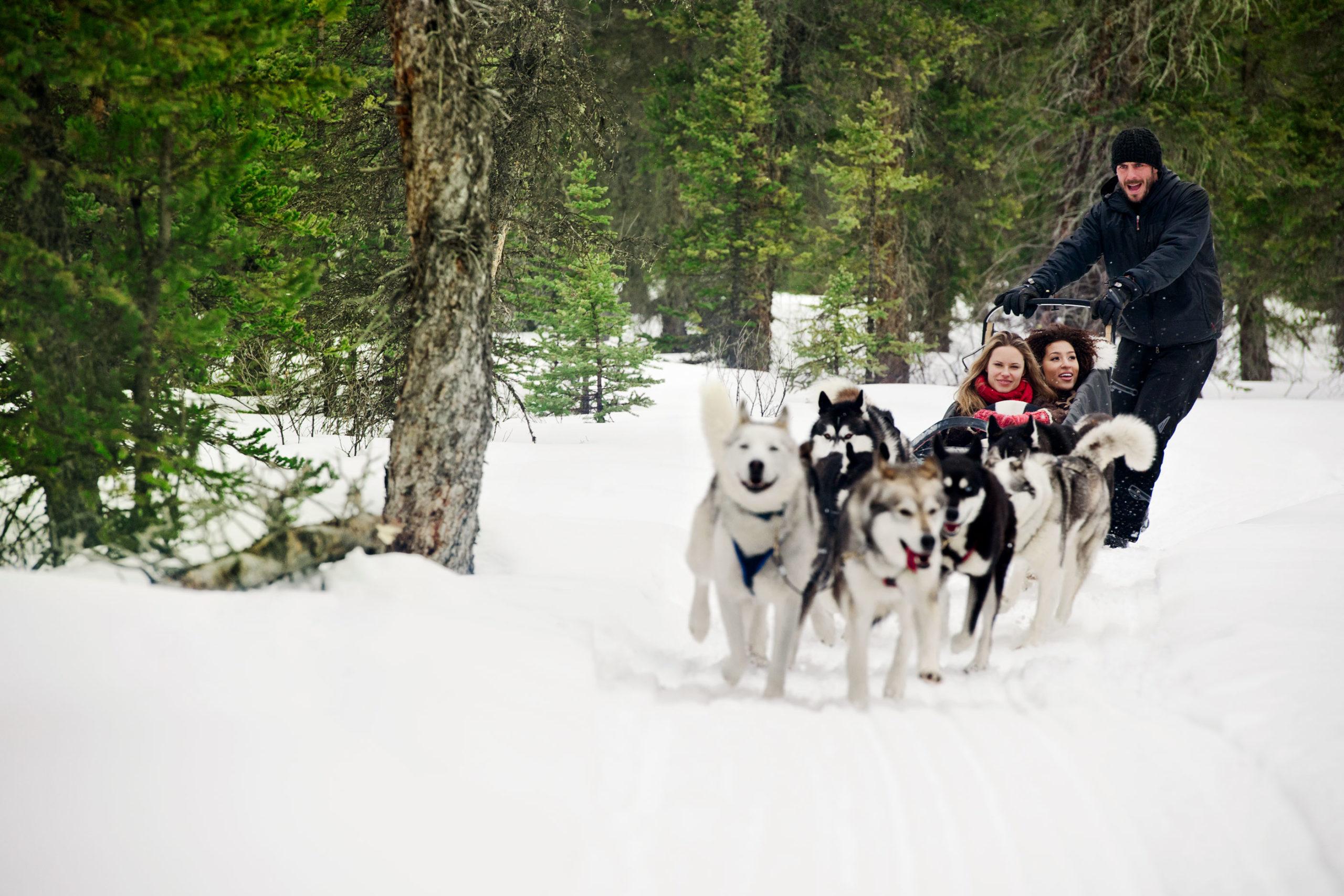 Dog Sledding Christmas Canadian Rockies