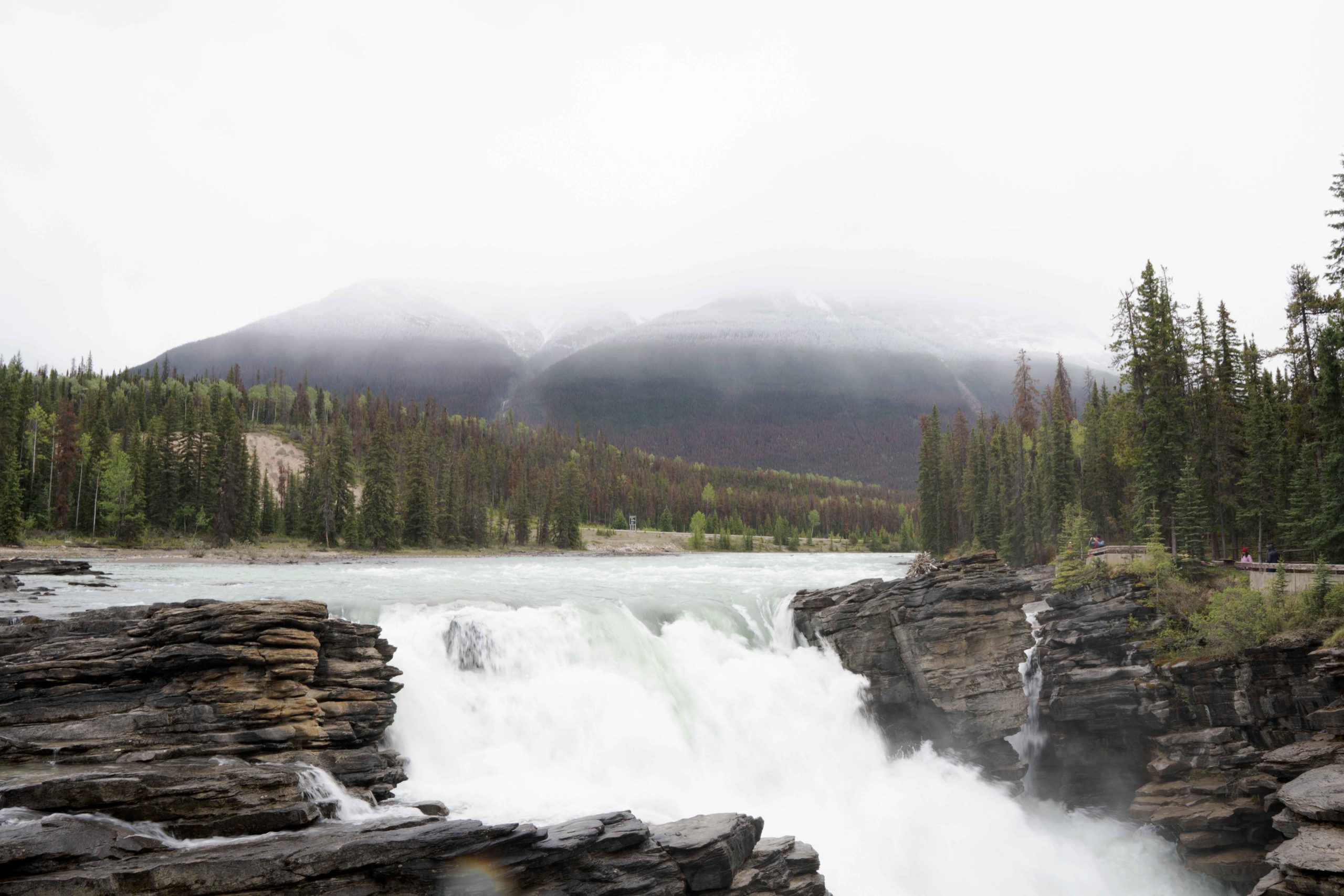 Athabasca Falls while driving through the Canadian Rockies by Jack Hawkins