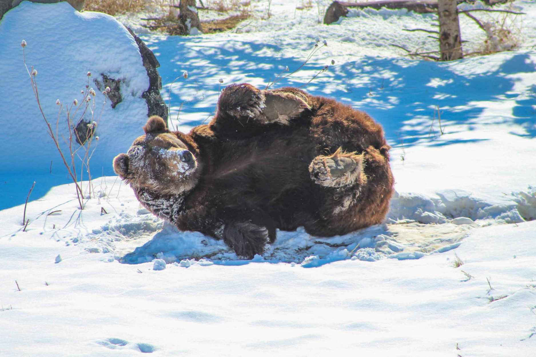 Sleeping Beauty: What do bears DO all winter? Main Photo