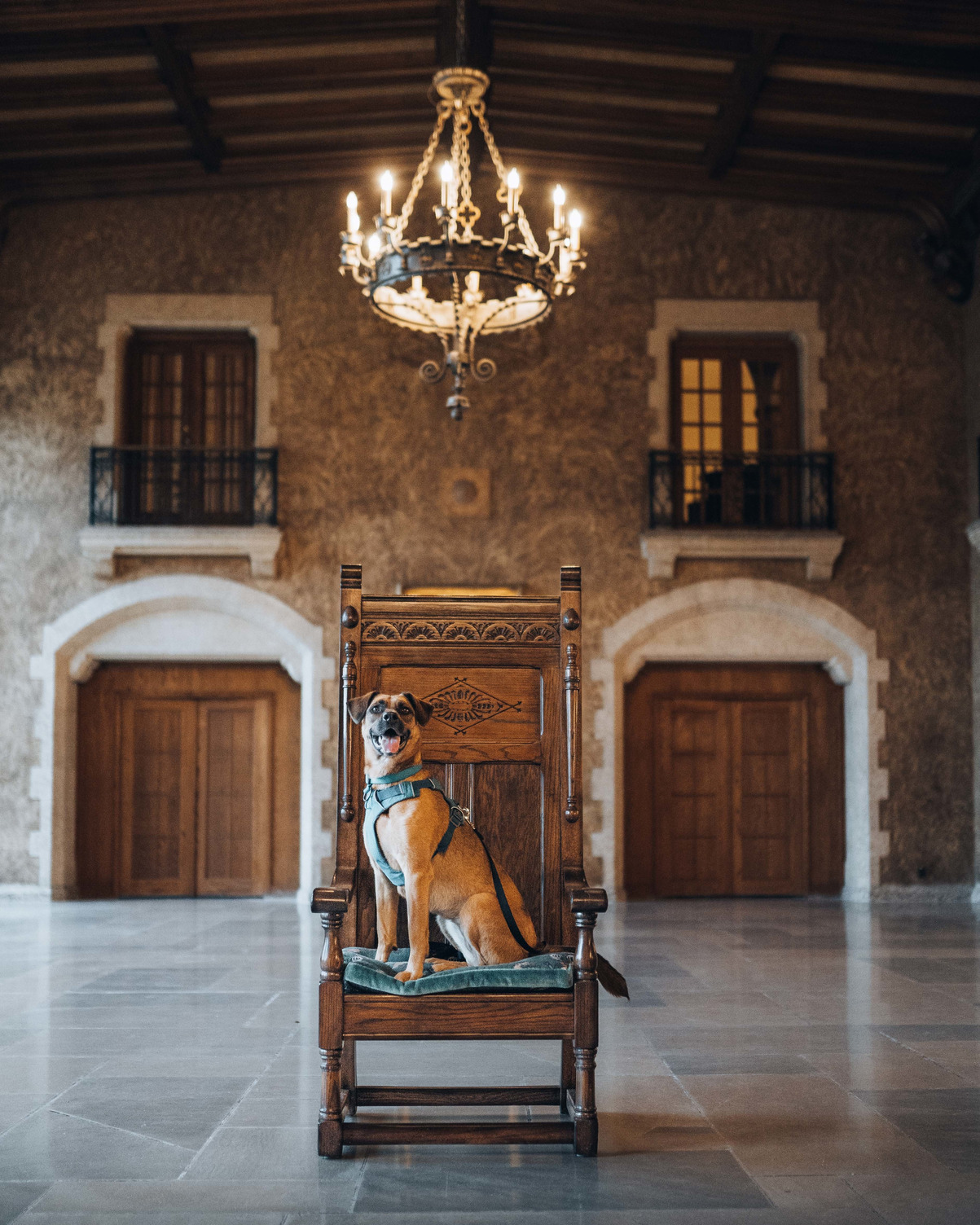 A dog from the Bow Valley SPCA sits on a throne in Mount Stephen Hall at the pet friendly Fairmont Banff Springs