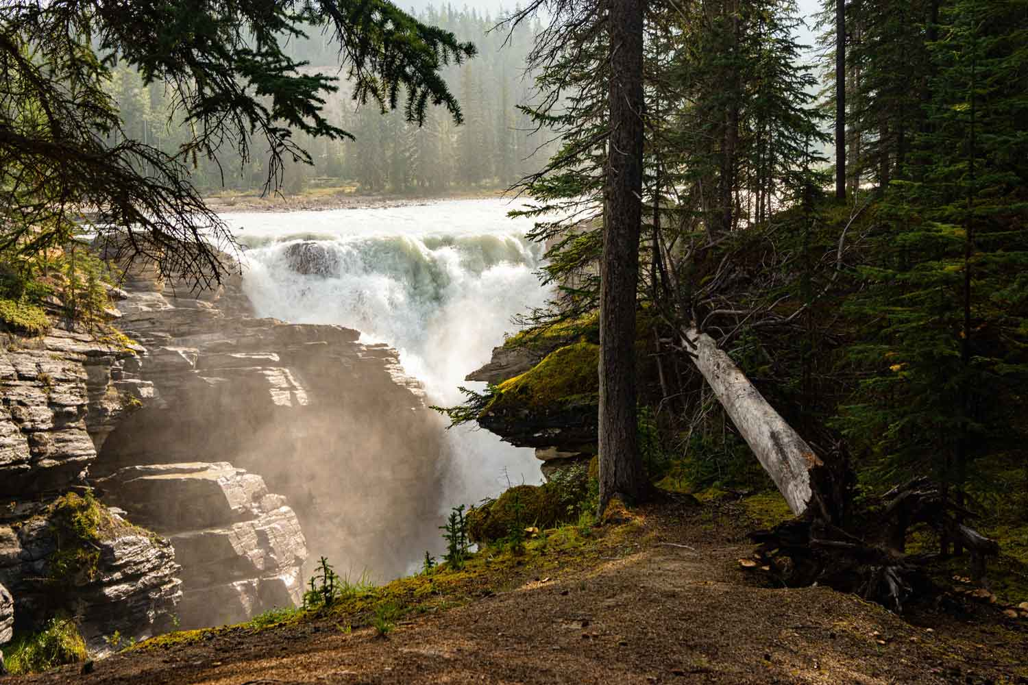 Athabasca Falls plummets over the rocks during summer in the Canadian Rockies