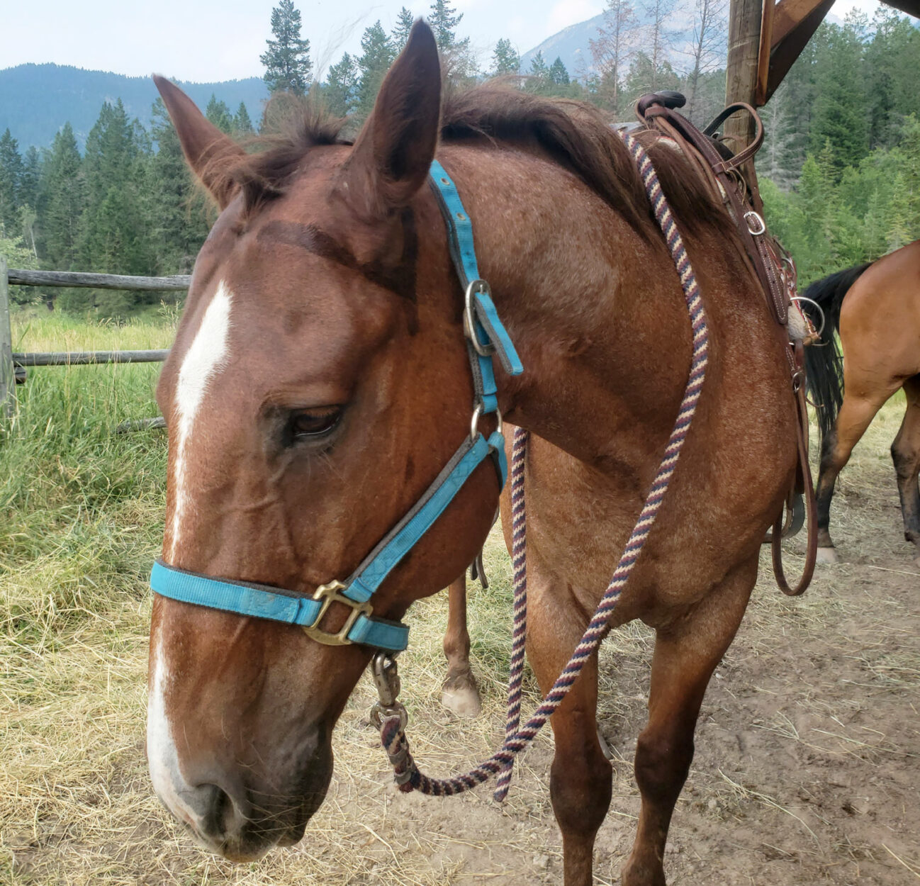 Horseback Riding in the Columbia Valley Main Photo