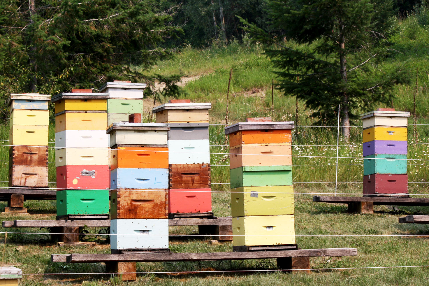 Beehives at Columbia Wetlands Outpost