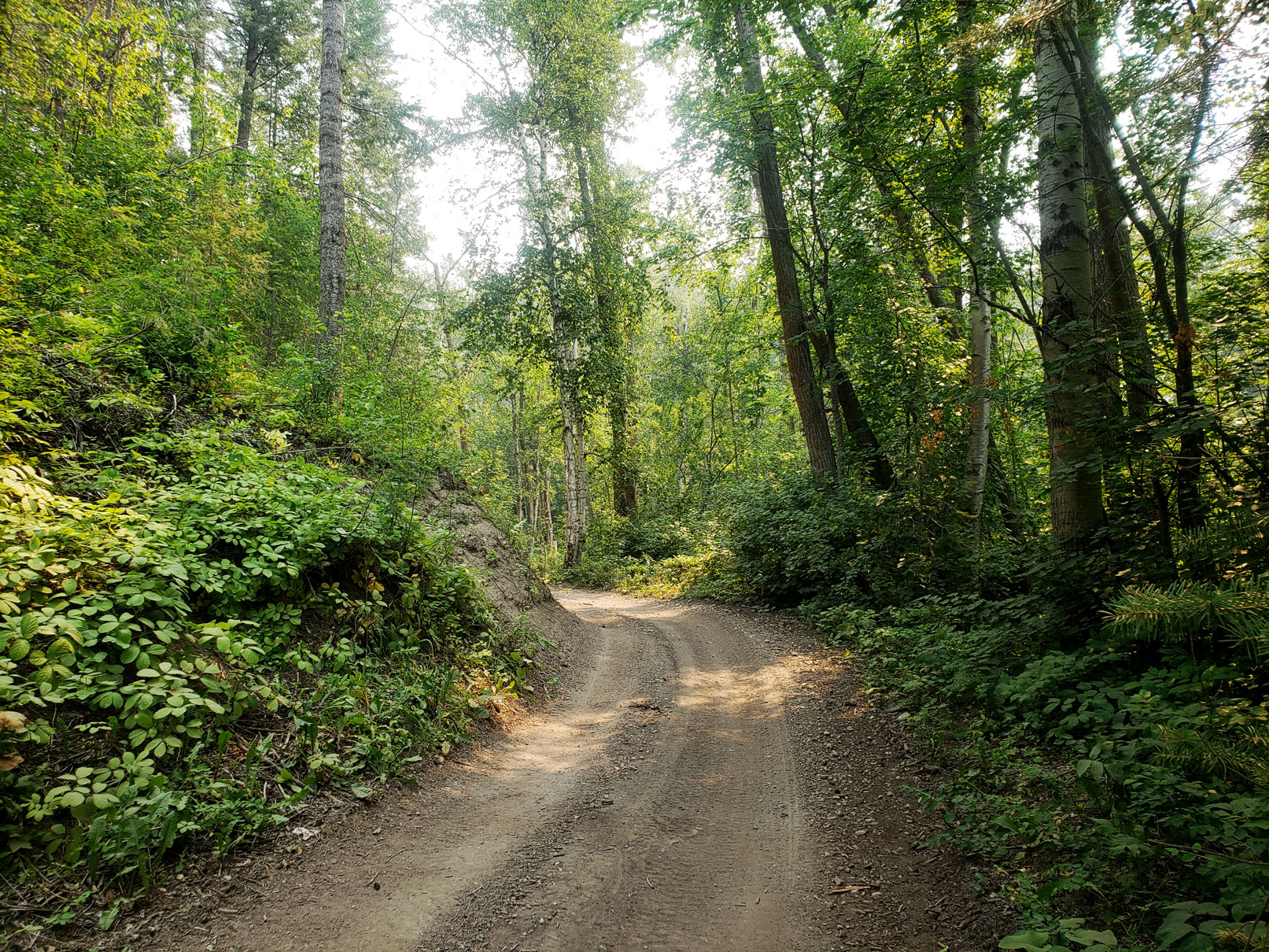 Forest trails at Columbia Wetlands Outpost